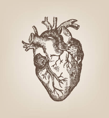 blood circulation: Human Heart Hand Sketch Style. Vintage Editable Clip Art.