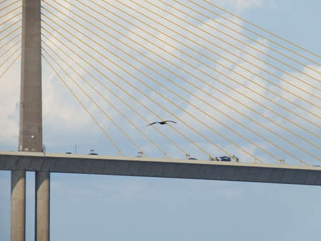 Sunshine Skyway Bridge, Tampa Bay, Florida, Pelican flying