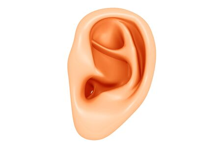 Human Ear. 3d render