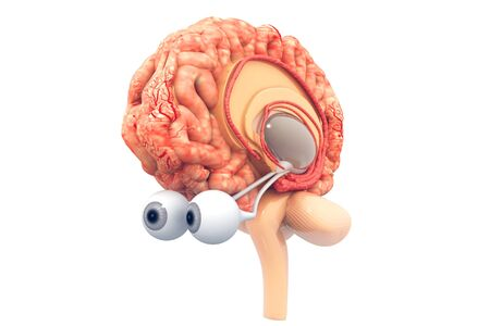 Anatomy of Human brain.3d render