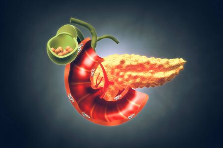 Human Pancreas. 3d illustration