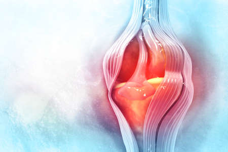 Anatomy of human knee joint. 3d illustration