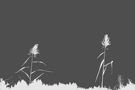 Silhouette of Reed Bush. Vector Illustration Stock Photo