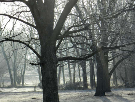 Frosted morning trees Imagens