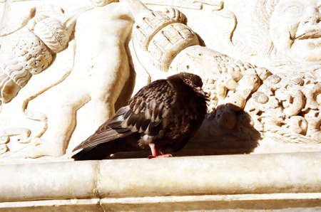 A pigeon at Castel Nuovo (Maschio Angioino) in Naples, Italy