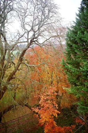 Trees at Windsor Castle in Windsor, England photo