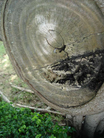 annual ring annual ring: Trees annual ring