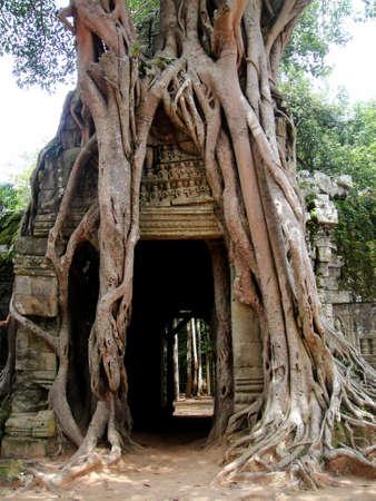 The third eastern gopura with strangler fig at Ta Som, Angkor, Cambodia