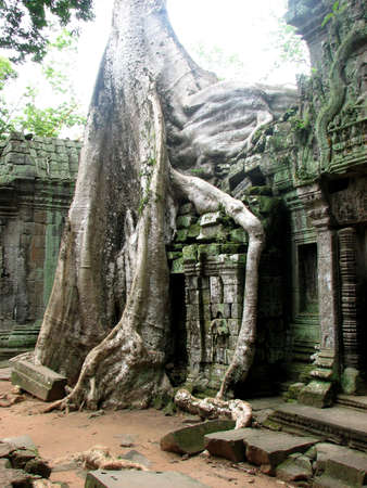Rooted scene at Ta Prohm, Angkor, Cambodia