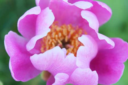 Close up of purple flowers photo