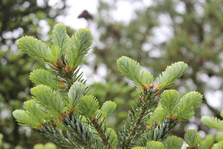 Close up of pine tree in the Sangumburi Crater in Jeju Island, South Korea