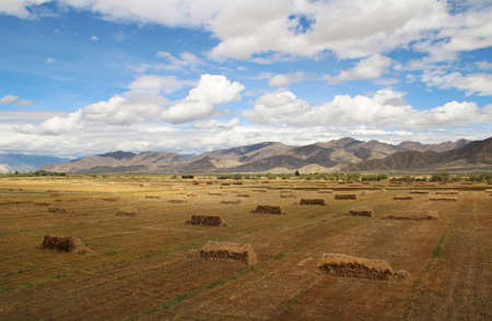 The highland barley field in sunny day, Tibet, China photo