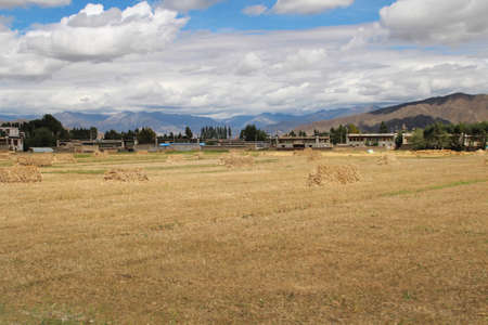 Tibetan village and highland barley field in sunny day, Tibet, China