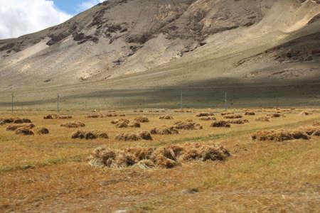 Highland barley field in Tibet, China