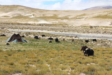 nomadic: View of the Tibetan nomadic tent with yaks on the way to Everest Base Camp, Tibet, China