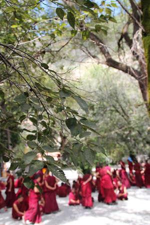 debating: Monks Debating in Sera Monastry, Lhasa, Tibet Stock Photo