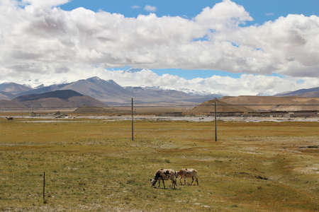 View of the Himalaya mountains and Tibetan village with yaks in Tibet, China