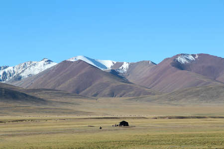 Beautiful grasslands with yaks, Nomadic tents, Tanggula Mountains and blue sky in Tibet, China