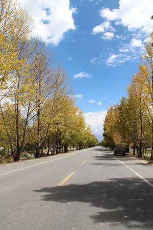 Beautiful autumn view of the trees along the roadside in Lhasa