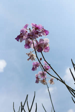 Orchid under the sunlight