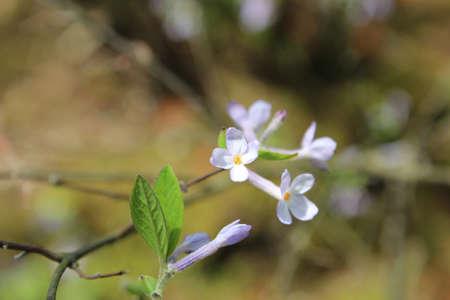Focus on center of the small white purple flower in springtime stock focus on center of the small white purple flower in springtime stock photo 63160482 mightylinksfo