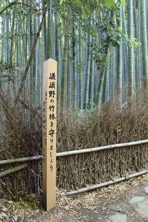 arboleda: Arashiyama Bamboo Grove, Kyoto, Japón
