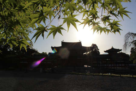 The Phoenix Hall of Byodo-in Temple with the maple leaves as the foreground during sunset in Kyoto, Japan