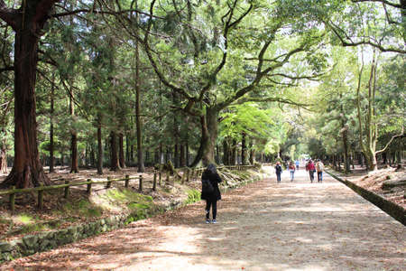People walking at Kasuga-yama Hill Primeval Forest to Kasuga Grand Shrine with sunny day in spring, Nara, Japan Editorial