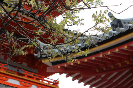 Wisteria as clear foreground and Japanese roof and pagoda as blur background in Kyoto, Japan