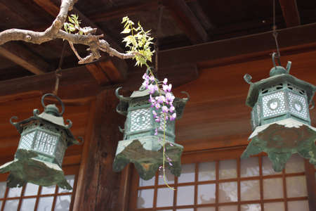A ornate bronze lantern as the famous point of Kasuga Grand Shrine with the wisteria as the clear foreground in Nara, Japan