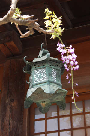 A ornate bronze lantern as the famous point of Kasuga Grand Shrine with the wisteria as the blur foreground in Nara, Japan