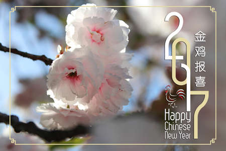 Chinese New Year Greeting Card 2017 with the beautiful Japanese cherry blossom during spring Stock Photo