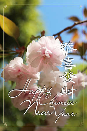 Chinese New Year Greeting Card as Gong Xi Fa Cai with the beautiful Japanese cherry blossom during spring