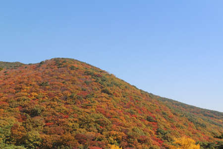 View of colourful autumn leaves at Geumjeongsan mountain from Beomeosa Temple in Busan, South Korea