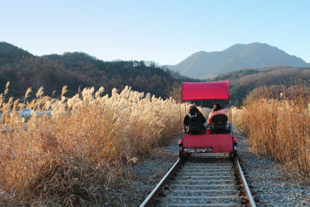 Sunset Rail bike with the pampas grass surrounding in autumn at Gapyeong Rail Park, South Korea Archivio Fotografico