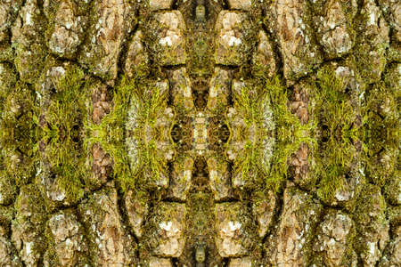 Closeup abstract photo of a tree trunk covered by moss.