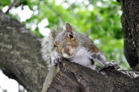 Curious Squirrel - America