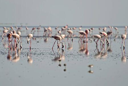Flamingos at Lake Natron
