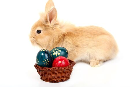 young red rabbit with easter eggs photo
