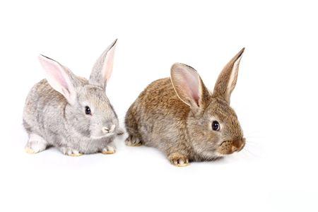rabbits photo