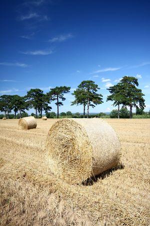 douglas: Hay bales and Douglas pine