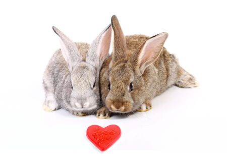 Curious young gray rabbits with red heart
