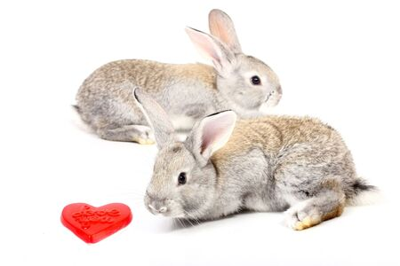Curious young gray rabbits with red heart photo