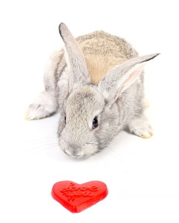 Curious young gray rabbit with red heart photo