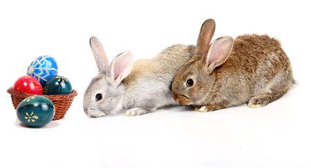lapins jeunes avec les oeufs de P�ques  Banque d'images