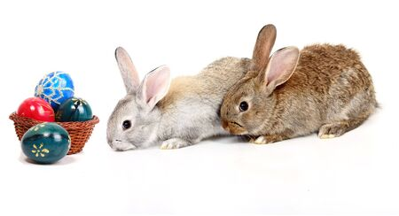 young rabbits with easter eggs