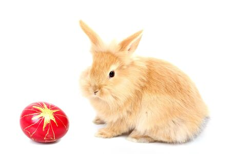 snooping: young rabbit with easter egg Stock Photo