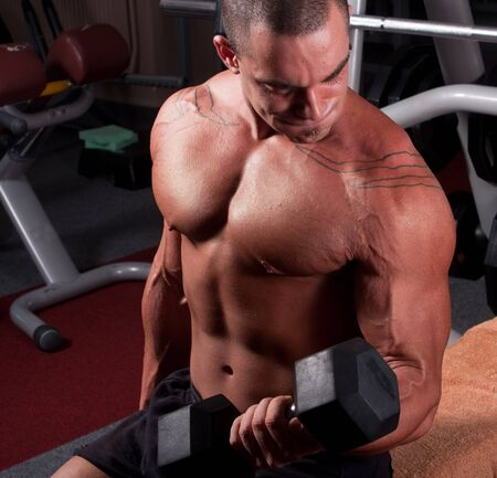 muscular body: bodybuilder training his bicep in gym