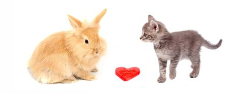 pussy cat: valentine heart and pussy cat and rabbit Stock Photo