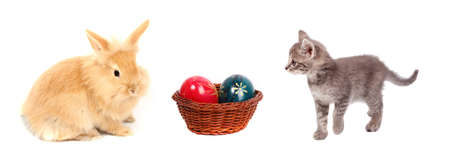 young rabbit and cat with easter eggs photo